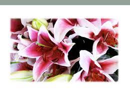 Bulk Flowers Online Bulk Flowers Ppt Download
