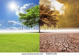 tree environmental change climate change weather stock photo