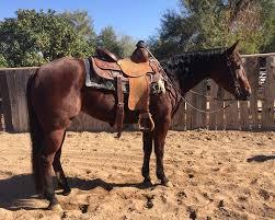 Nice Hourse Hip 76 113 Hershberger Performance Horses