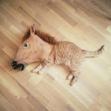 fake horse head so this exists horse head squirrel feeder funny