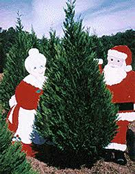 jacks creek farms christmas trees