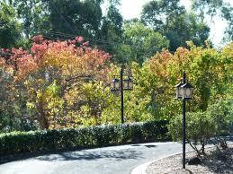 wollongong botanic gardens nan tien temple june 16 penshurst rsl travel club