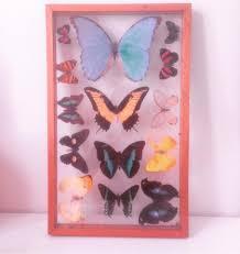 Meaningful Butterfly - butterfly a meaningful
