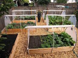 50 best raised beds for tomatoes images on pinterest raised beds