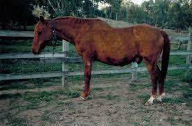ferrari horse vs mustang horse farriervet lancaster canine equine feline