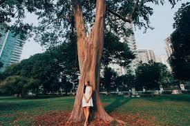 rainbow eucalyptus tree the cheryl diaries