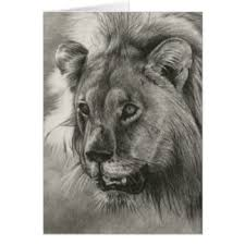 pencil drawing of a lion greeting cards zazzle