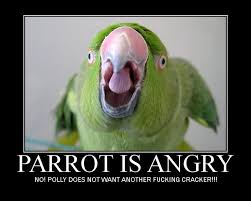 Parrot Meme - 30 best funny animals images on pinterest funny animals funny