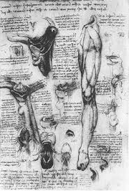 Leonardo Da Vinci Human Anatomy Drawings Leonardo Da Vinci Http Drawingowu Files Wordpress Com 2011 11