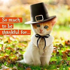 91 best thanksgiving cats takksigelse katten images on