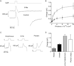 dissecting the determinants of light sensitivity in amphioxus