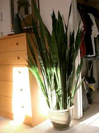 best bedroom plants 10 best houseplants to de stress your home and purify the air
