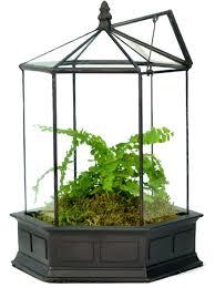 succulent planters for sale amazon com h potter six sided glass terrarium wardian case plant