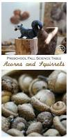 preschool squirrels and acorns science activity
