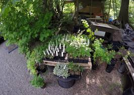 bc native plants pacific northwest landscaping native plants landscaping services
