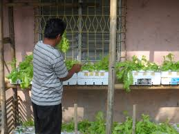 beating the floods with hydroponic gardening in tagumpay