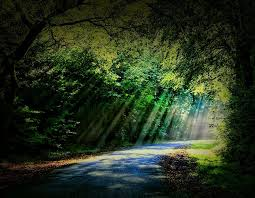 forests light road places shade sunbeams forest brown colors