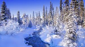 steamy river by the snowy forest wallpaper nature wallpapers