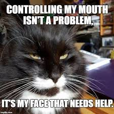 Good Cat Meme - best cat memes for the week to give you a giggle