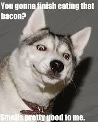 Hungry Memes - hungry dog meme lekton info