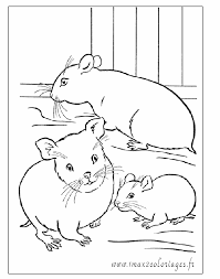 Coloriage Hamster  Les beaux dessins de Animaux à imprimer et