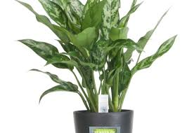plants for office good plant for office finest we pride ourselves on excellent