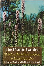 native plants in texas plano prairie garden prairie inspiration
