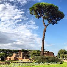 46 best roma verde images on rome italy pine tree and