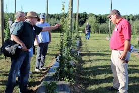 ohio specialty crop hops could make a return farm and dairy
