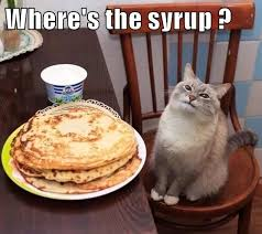 Funny Breakfast Memes - lolcats pancakes lol at funny cat memes funny cat pictures