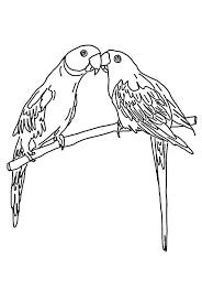 mating parrot coloring download u0026 print coloring