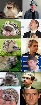 Benedict Cumberbatch Otter Meme - benedict cumberbatch is an otter then martin freeman is a hedgehog