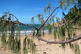 florence bay on magnetic island budget travel talk