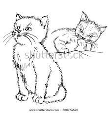 sketch frightened domestic cat stock vector 680554210 shutterstock