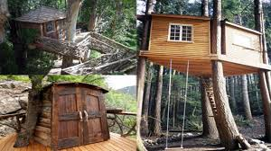 best tree houses breathtaking cool tree house plans photos best inspiration home