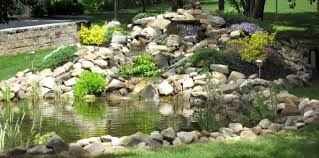 best low maintenance plants for your backyard pond beautiful and