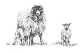 swaledale sheep pictures diana rosemary lodge