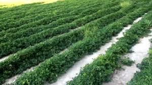 peanuts don u0027t grow on trees youtube