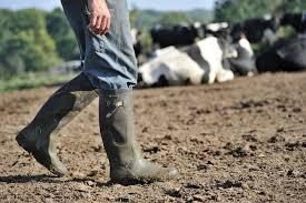 chambre d agriculture de l yonne quelle est la situation des principales filières agricoles dans l