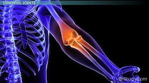 types of joints u0026 joint structures in the body video u0026 lesson