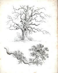 botanical black and white tree sketches 4 schwarz weiß