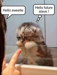 Cute Kitten Memes - 20 funny animal jokes and memes funny animal jokes funny animal
