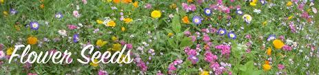 Flower Seeds Online - buy flower seeds online bakker com