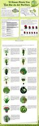 Air Purifying Plants 9 Air by 8 Best Plants Images On Pinterest Bedroom Plants Chinese Money