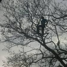 grun tree care 16 reviews tree services 10854 roseberg ave s