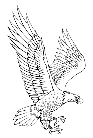eagle drawing vector of a cartoon bald eagle holding a medal