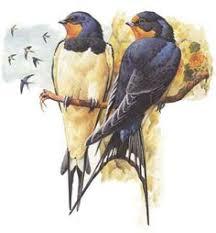 Barn Swallow Tattoo Designs Swallow In Flight Barn Swallow Tat Pinterest Swallows Barn