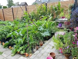 home gardening tips garden grown on home gardening tips india in hindi