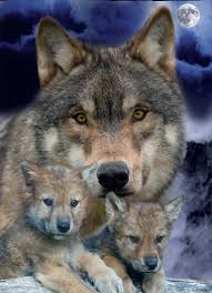 awwwwwwwwwwwww 3 wolves wolf and