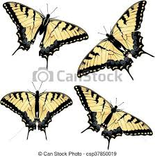 tiger swallowtail butterfly black yellow tiger swallowtail